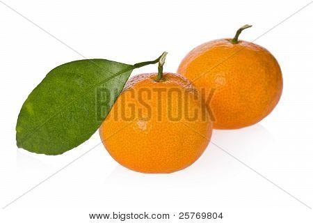 Satsuma Oranges (citrus Unshiu)