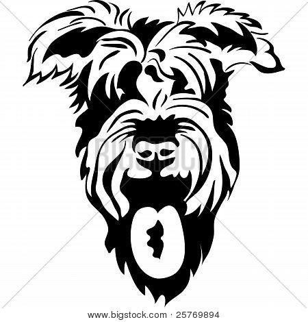 Vector Sketch Of Purebred Dogs Schnauzer