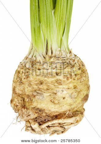 Sellerie Root (Knollensellerie)