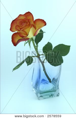 Valentine Rose In Vase With Diamond.