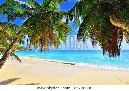 Palm Over Tropical Beach
