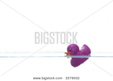 Purple Duck Sinking