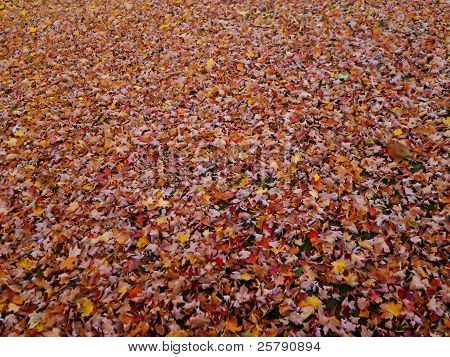 Autumn leaves covering the ground