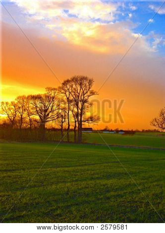 Sunset Field