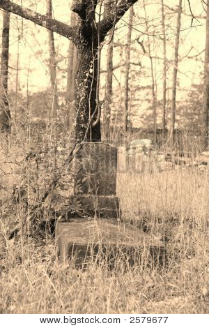 Old Grave By Tree