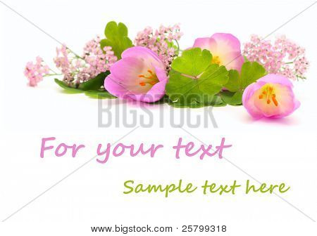 Pink flowers isolated on white with copy space
