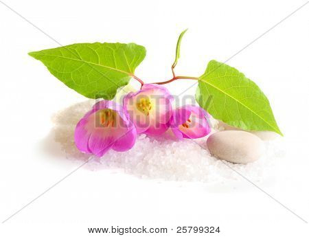 Flower,stones and bath salt, isolated on white