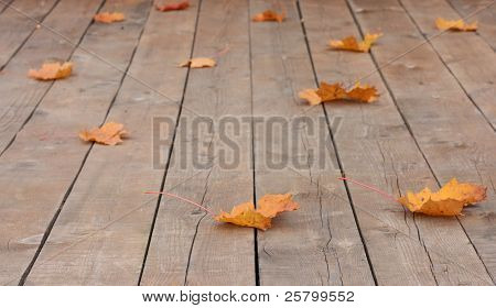 Autumn leaves over wooden boards floor.
