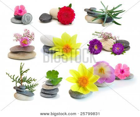Set flowers and stones, isolated on white background.