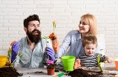 Mother, Father And Son Gardening Together. Family Planting Flowers In Flowerpot. Family Work Togethe poster