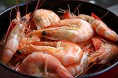 Whole Cooked Prawns poster