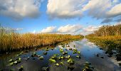 pic of marshlands  - Scenic landscape in Everglades national forest Florida - JPG
