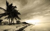 stock photo of beach hut  - Palm trees by the beach in sepia color tone with cloudy sky background - JPG