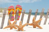 flip flops hanging on fence by starfish
