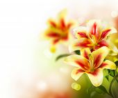 image of greeting card design  - Lily Flowers border design - JPG