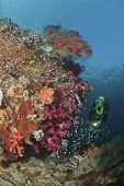 foto of raja  - The view of colorful plants in a general reef scene Raja Ampat Indonesia - JPG