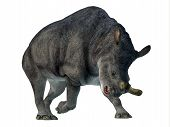 Brontotherium Mammal On White 3d Illustration - Brontotherium Was A Horned Herbivorous Mammal That L poster