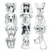 Hand Drawn Dog Portraits On White Background. Vector Dog Set. Sketches Of Purebred Dogs. Vector Elem poster