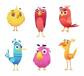 Angry Cartoon Birds. Chicken Eagles Canary Animal Faces And Feathers Vector Game Characters Of Color poster