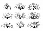 Vector Image Bushes Without Leaves. Set. Autumn Winter. Bushes. Fallen Down Leaves poster