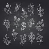 Vector Hand Drawn Medical Herbs Set Isolated On Black Chalkboard Background Illustration, Herb Natur poster