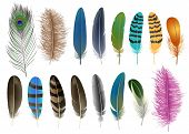 Feather Icon Set. Realistic Set Of Feather Vector Icons For Web Design Isolated On White Background poster
