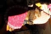 Kitten Sleeps On A Pillow And Is Covered With A Blanket.cute Little Kitten Sleeping In The Sun. Kitt poster