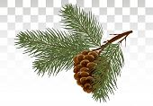 A Branch Of Pine / Cedar With A Cone. Postcard, Invitation. Green Realistic Branch Of Fir Or Pine Cl poster