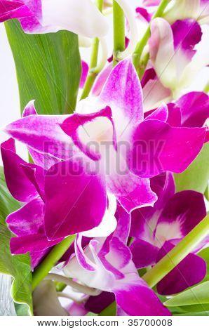 branch of violet orchids