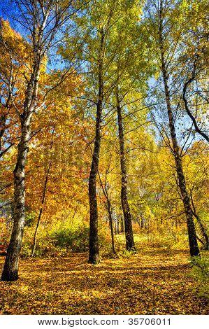 Vivid Autumn Grove.