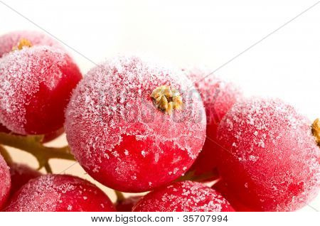 fruit  frozen in ice