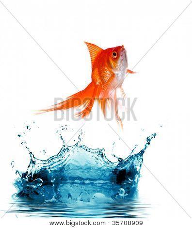 Goldfisch ist aus Wasser springen.