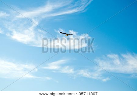 Seagull in the sky and clouds