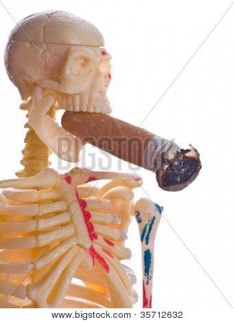 Trozo y esqueleto. Aislamiento en el blanco