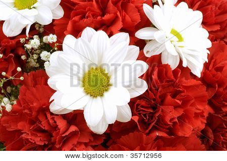 Beautiful red carnations and camomiles