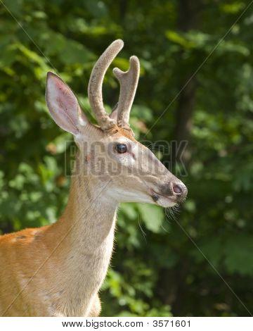 Strobist Buck