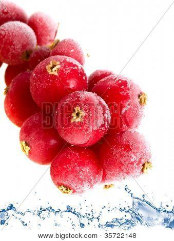 fruit  frozen in ice