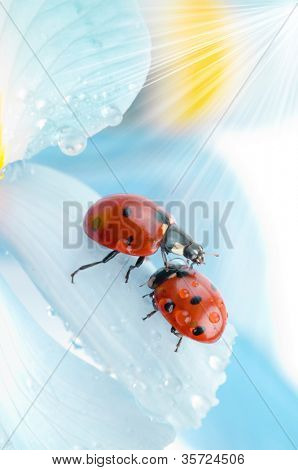 flower petal with ladybug under blue sky