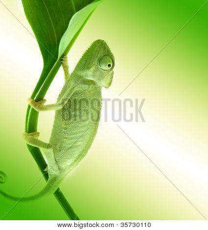 Camaleão na flor.