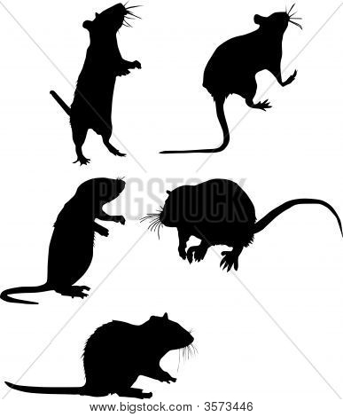 Five Rat Silhouettes