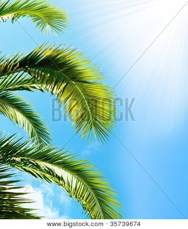 Palm brunch with sky