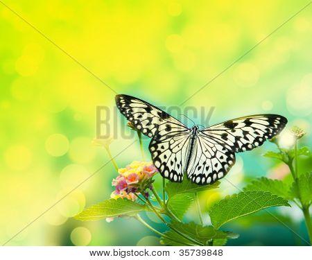 beauty butterfly on leaf. small DOF