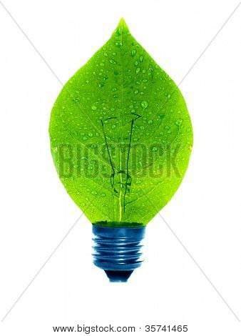 lamp green leaf. on isolated