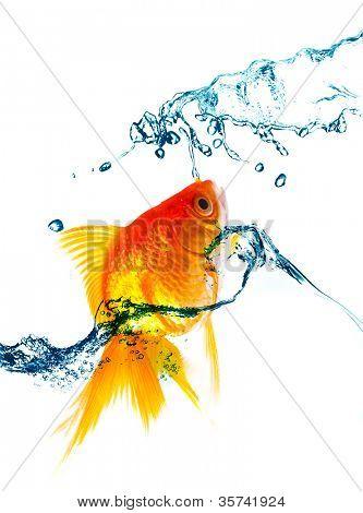 gold fish jumping over slash water