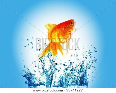 gold fish jumping over slash water