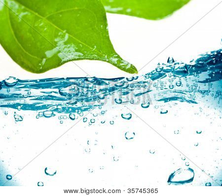 leaf with splash isolated on white