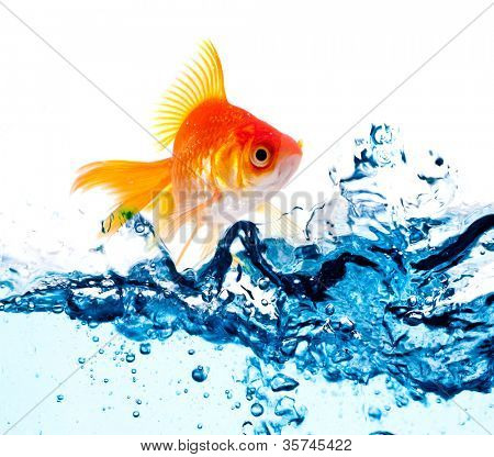 peces dorados saltando por encima de slash agua azul