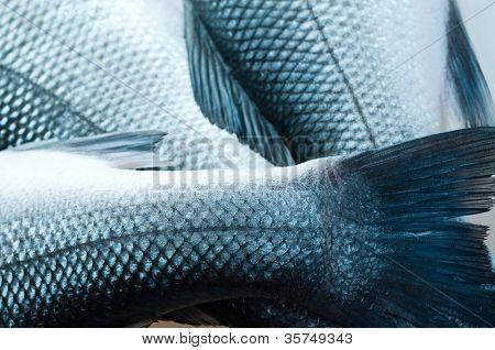 fresh organic fish. on white