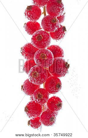 fresh Red currant in water