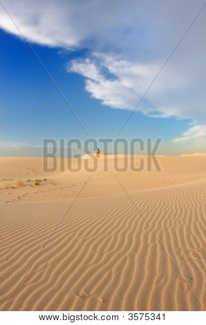 Man'S Path Leading Into The Desert